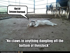 """No claws in anything dangling off the bottom of livestock"""