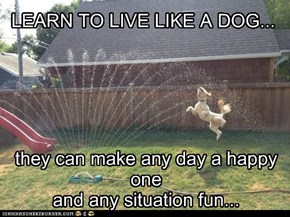 they can make any day a happy one  and any situation fun...