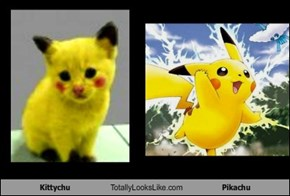 Kittychu Totally Looks Like Pikachu