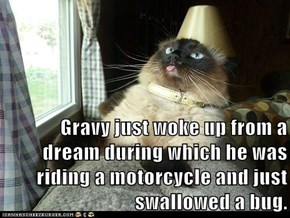 Gravy just woke up from a dream during which he was riding a motorcycle and just swallowed a bug.