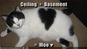 Ceiling  +  Basement  =  Moo ♥
