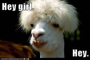 Hey girl.  Hey.