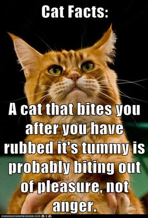 A cat that bites you after you have rubbed it's tummy is probably biting out of pleasure, not anger.