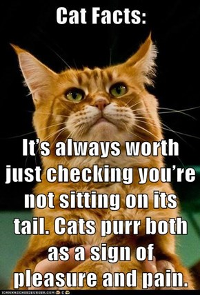 It's always worth just checking you're not sitting on its tail. Cats purr both as a sign of pleasure and pain.