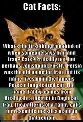 What's the first thing you think of when someone says Iran and Iraq? Cats? Probably not, but perhaps you should. Firstly, Persia was the old name for Iran, but its name lives on in the famous Persian long-haired cat. The name, Tabby, comes from Attabiyah,