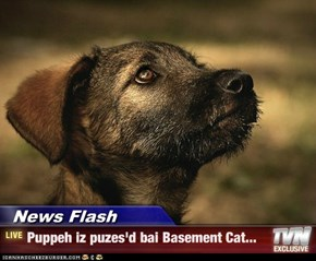 News Flash - Puppeh iz puzes'd bai Basement Cat...