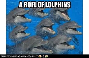 A ROFL OF LOLPHINS