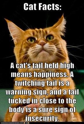 A cat's tail held high means happiness. A twitching tail is a warning sign, and a tail tucked in close to the body is a sure sign of insecurity.