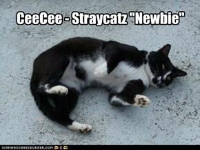 """CeeCee - Straycatz """"Newbie"""""""
