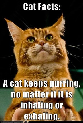 A cat keeps purring, no matter if it is inhaling or exhaling.