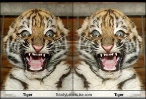 Tiger Totally Looks Like Tiger