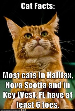 Most cats in Halifax, Nova Scotia and in Key West, FL have at least 6 toes.