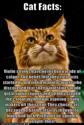Violin strings have never been made of catgut. The belief that they were was started by old violin manufacturers who discovered that sheep intestines made great violin strings and so they started the catgut myth to put aspiring string makers off the scent
