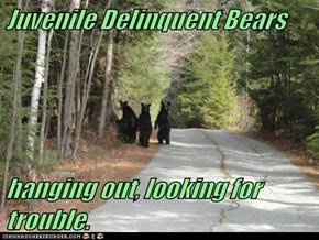 Juvenile Delinquent Bears  hanging out, looking for trouble.