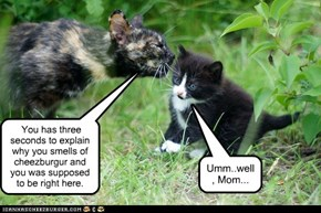 Think fast, kitteh!