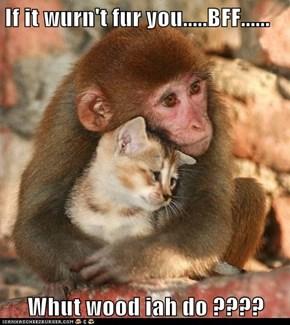 If it wurn't fur you.....BFF......  Whut wood iah do ????