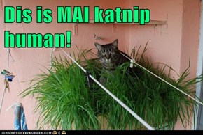 Dis is MAI katnip human!