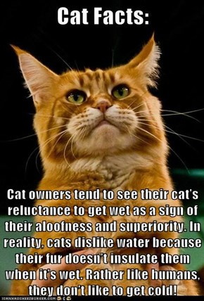 Cat owners tend to see their cat's reluctance to get wet as a sign of their aloofness and superiority. In reality, cats dislike water because their fur doesn't insulate them when it's wet. Rather like humans, they don't like to get cold!