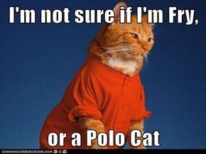 I'm not sure if I'm Fry,  or a Polo Cat