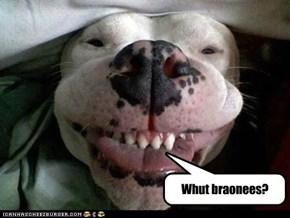 Stoner dog!