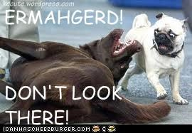 ERMAHGERD!  DON'T LOOK THERE!