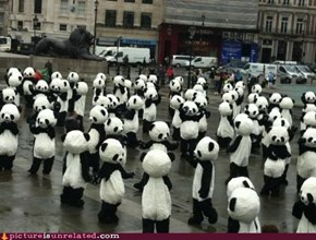 Suddenly, Pandas...