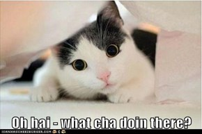 Oh hai - what cha doin there?
