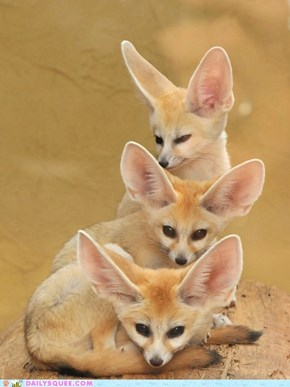Daily Squee: Squee Spree - Fennec Totem Pole