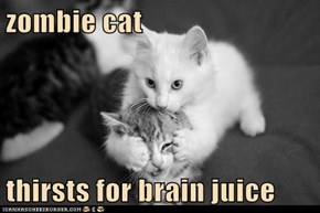 zombie cat  thirsts for brain juice