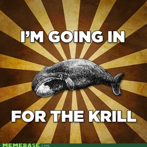 I'm going in for the krill