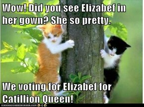 Wow! Did you see Elizabef in her gown? She so pretty.  We voting for Elizabef for Catillion Queen!