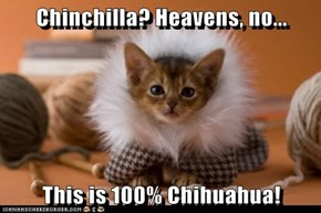 Chinchilla? Heavens, no...