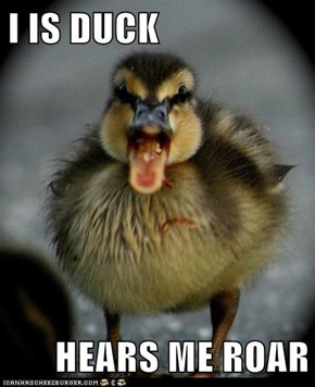 I IS DUCK  HEARS ME ROAR