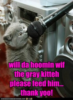 ALSO, da gray kitteh wants fancy feast!