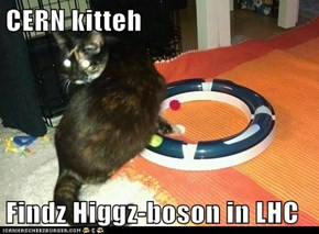 CERN kitteh  Findz Higgz-boson in LHC