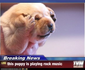 Breaking News - this puppy is playing rock music