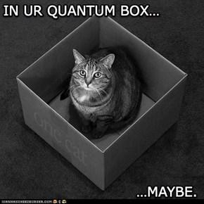 Quantum Cat
