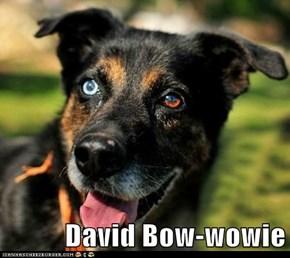 David Bow-wowie