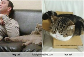 lazy cat Totally Looks Like box cat