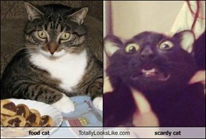 food cat Totally Looks Like scardy cat