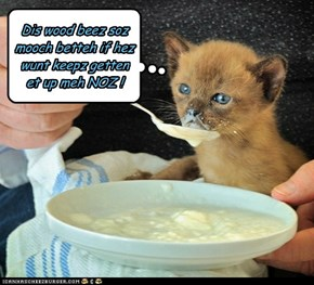 HOW TO FEED A KITTEH !