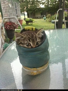 Cyoot Kitteh of teh Day: Iz a Foot, Nawt a Kitteh LOL!