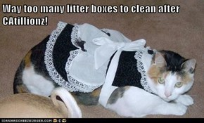 Way too many litter boxes to clean after CAtillionz!