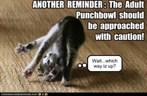 Cattillion 2012:  Another reminder about the Adult Punchbowl!