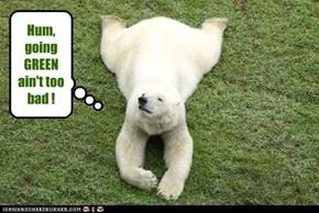 Eco-Bear