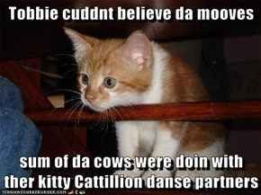 Tobbie cuddnt believe da mooves  sum of da cows were doin with ther kitty Cattillion danse partners