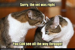 Sorry, the vet was right.