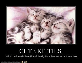 CUTE KITTIES.