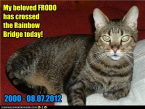 My beloved FRODO has crossed the Rainbow Bridge today!