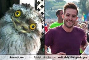 Sarcastic owl Totally Looks Like rediculsly photogenic guy